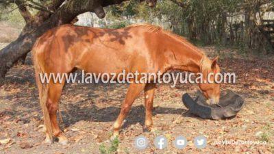 Denuncian el robo de un equino en Palmito