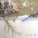 Denuncian presencia de lagartos en el río Calabozo, en Tantoyuca
